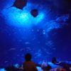 新江ノ島水族館に泊まろう「お泊りナイトツアー」おススメと注意点